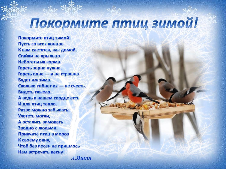 Положение по конкурсу зимующие птицы